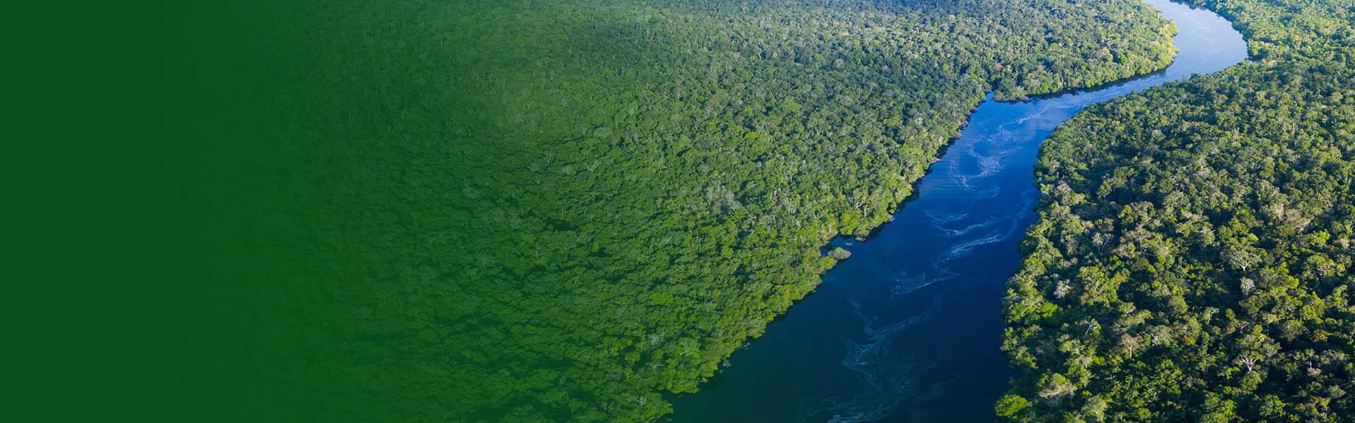 Fundo verde e a floresta com um rio azul no meio