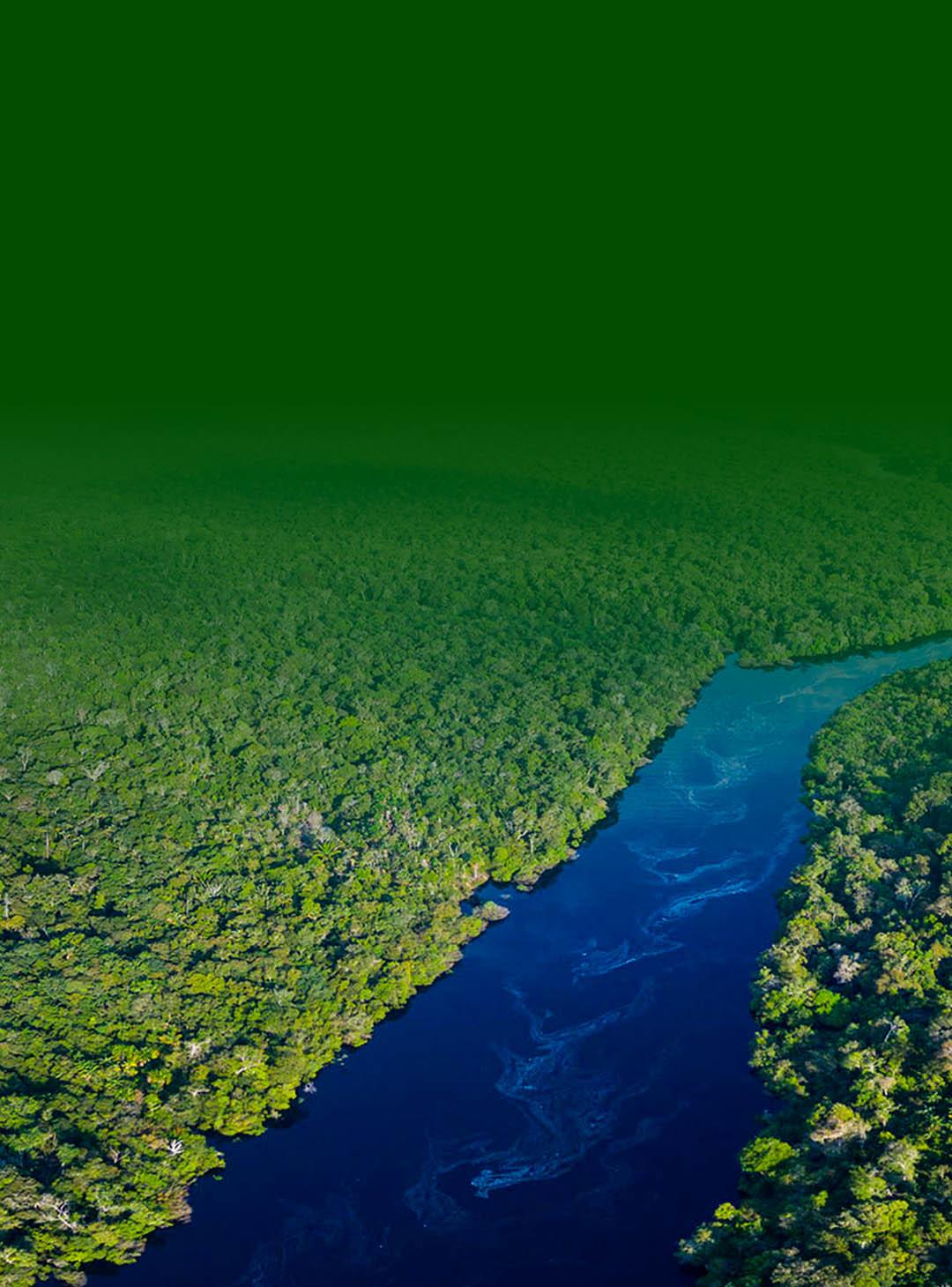 Floresta da amazonia mostrando no meio um rio