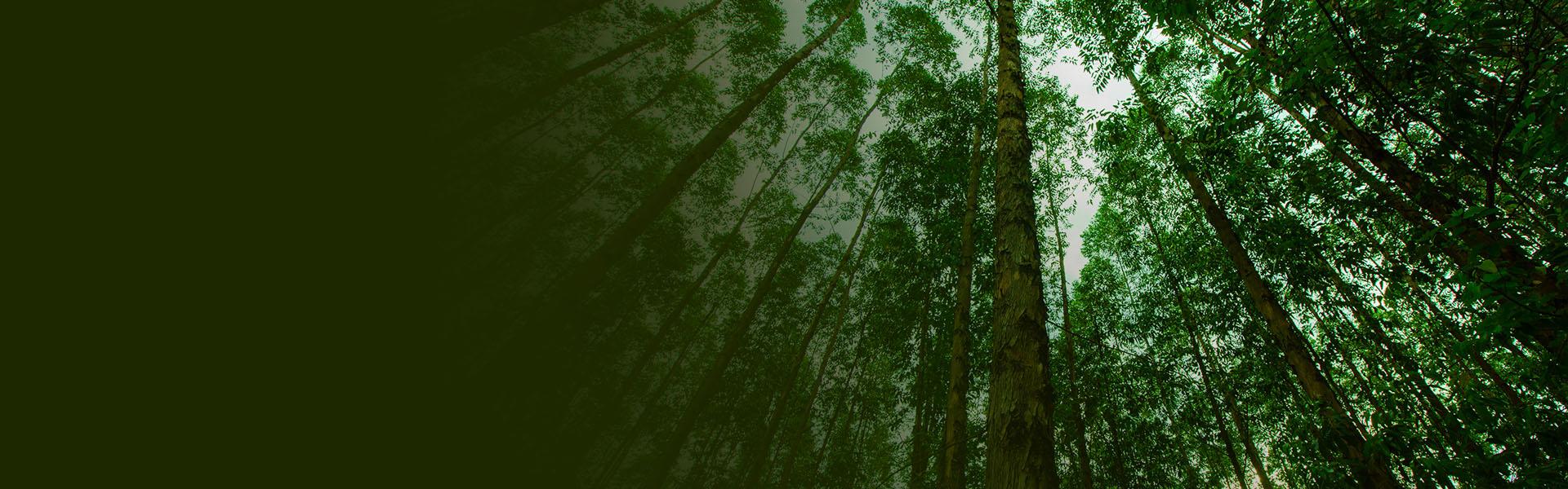 fundo com arvores grandes com folhas verdes