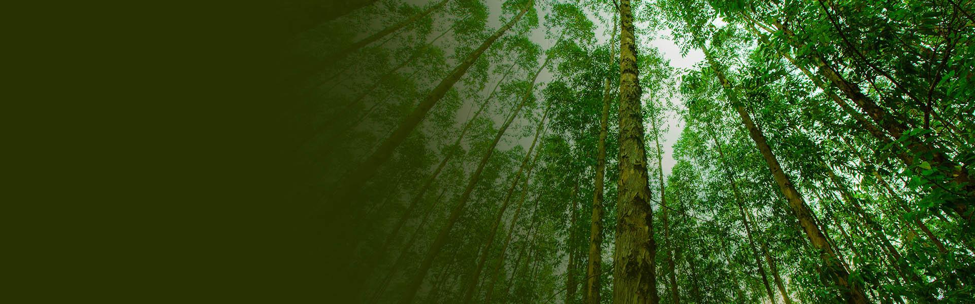 arvores grandes com folhas verdes