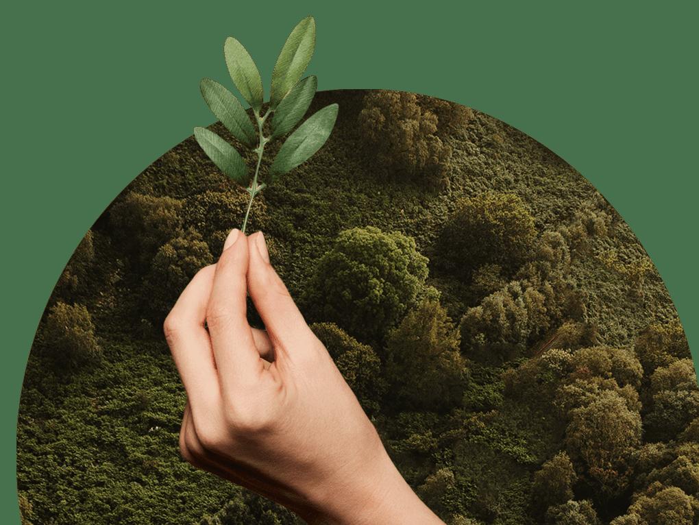 Mão segurando uma planta com árvores ao fundo